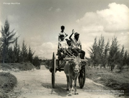 Ox Cart at the Beach - Children Playing and Enjoying - Mauritius - 1960s (Courtesy: Vicky Cushmajee)