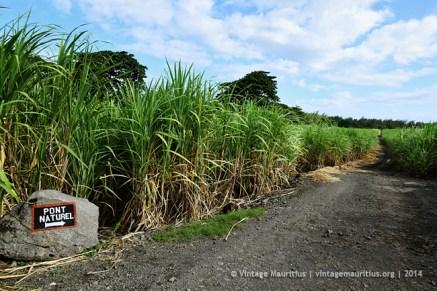 Path to Pont Naturel - Mauritius - Cane Fields - 2014