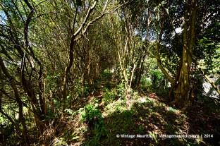Sadally Vacoas Old Railway Track Pathway 1924