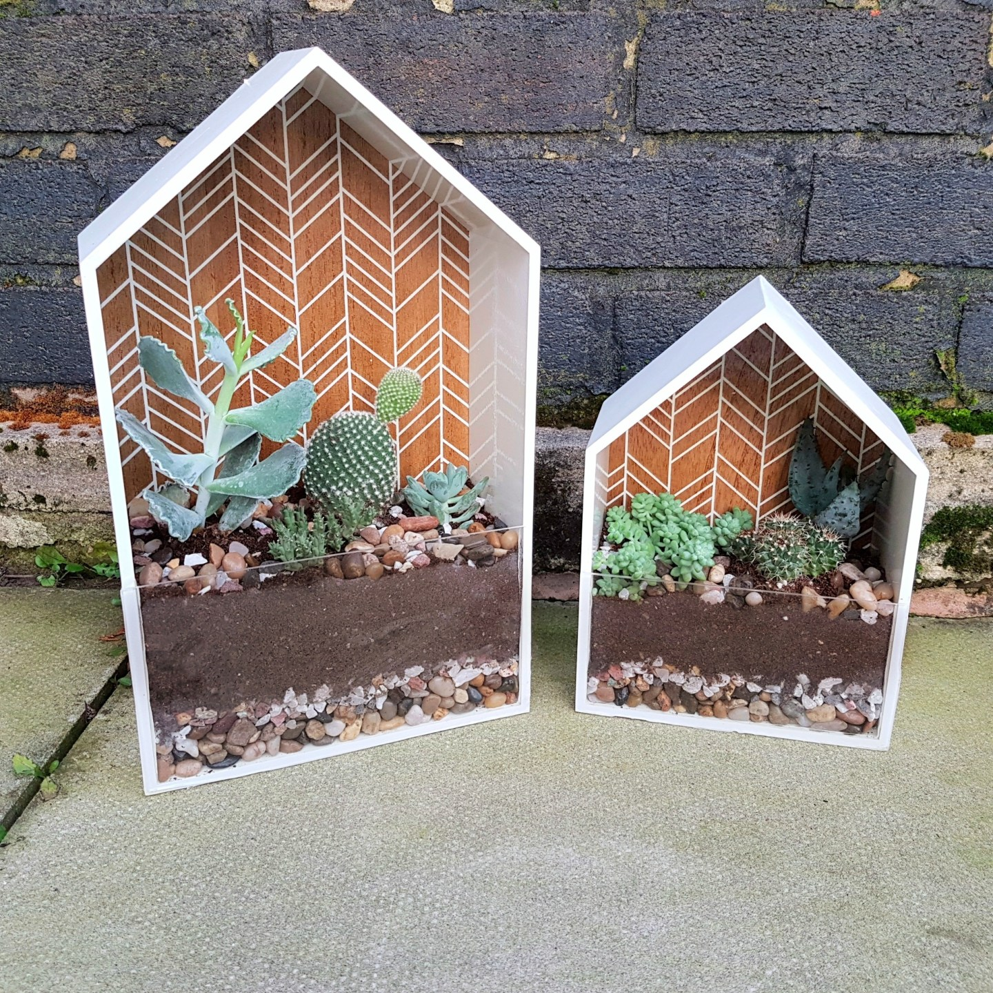 DIY: Wall Hanging Terrarium