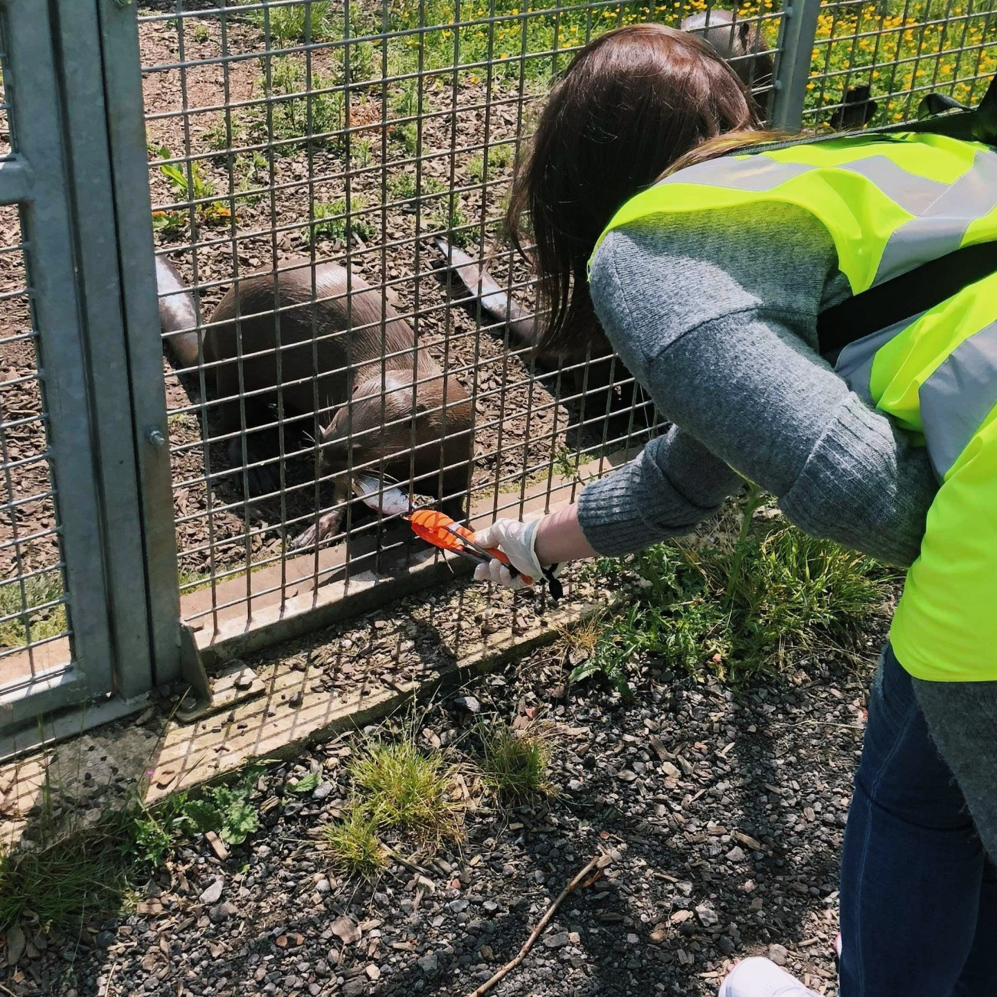 Yorkshire Wildlife Park VIP Experience Review