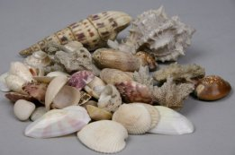 Seashell Collection from AuntHattiesAttic