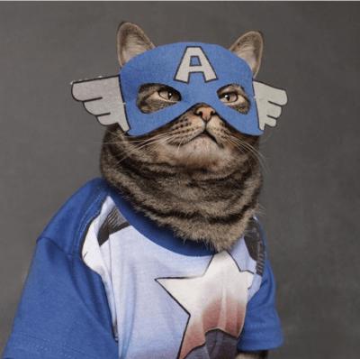 Cansei de ser gato, agora vou ser Capitão América