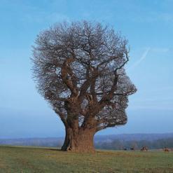 Pink Floyd – Tree of Half Life T-shirt (1997)