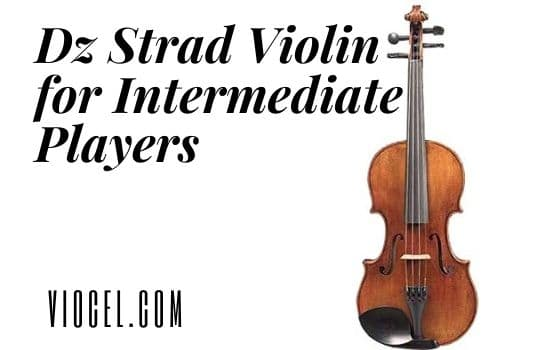 Dz Strad Violin for intermediate Players