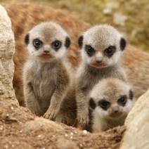 baby-animals-601