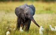 nature-animals-cute-little-baby-elephant-wide