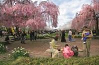 2008-Subaru-Cherry-Blossom-Festival-of-Greater-Philadelphia-1
