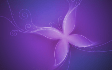 Purple butterfly wallpaper1