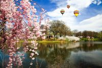 The-Cherry-Blossom-Festival-in-Branch-Brook-Park-New-Jersey.-Photo-by-Gary-718-at-www.123RF.com_
