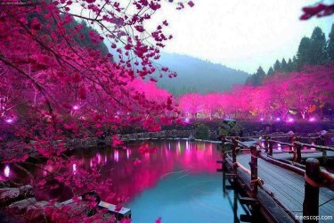 travel-mondays-cherry-blossom-lake-sakura-japan