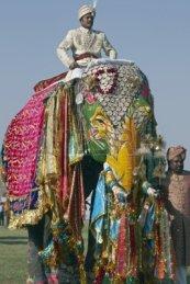 8500459-jaipur-india--21-de-marzo-de-2008-mahout-montando-un-elefante-decorado-en-el-festival-anual-de-elefa