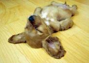 cutest-puppies-8