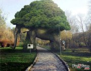 elephant-tree-arch-amazing-garden