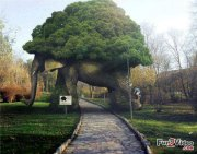 elephant-tree-arch-amazing-garden