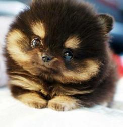 puppy-puppies-32057231-500-518
