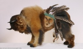 extreme-dog-grooming-buffalo-590x350