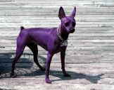 purple_dog2