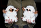 cute-dolls-fluffy-fur-animal