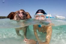 02-swimming_pigs
