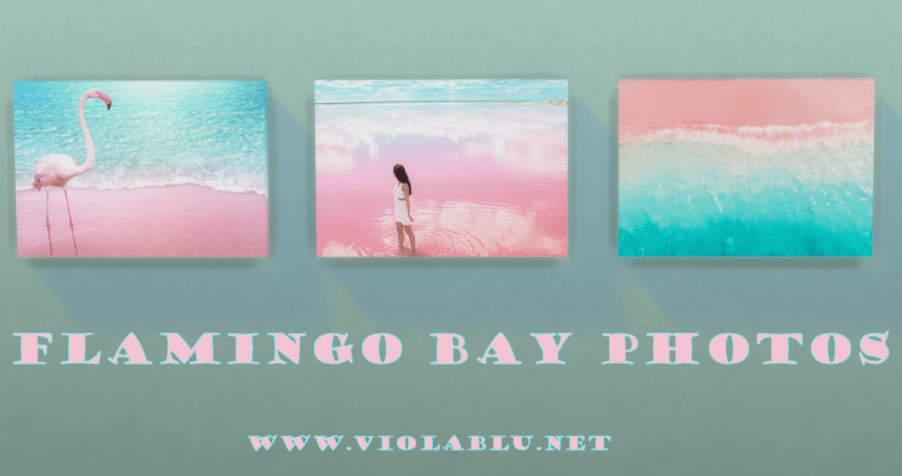 Flamingo Bay Photos for Sims 4