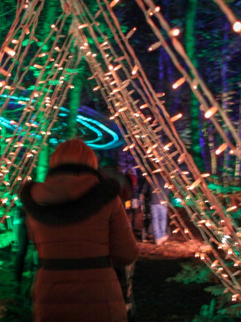 Walking through the lights at Magical Woodland