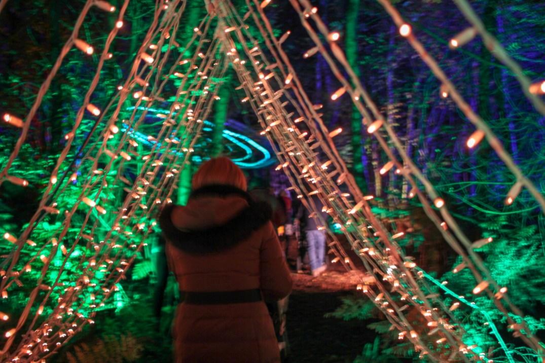 Walking through the lights at Magical Woodland