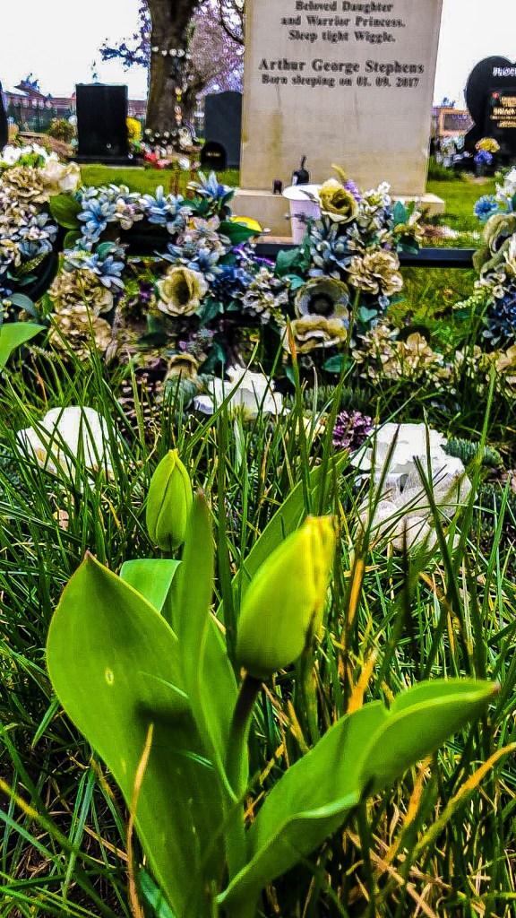 Spring-graveside-violet-skies
