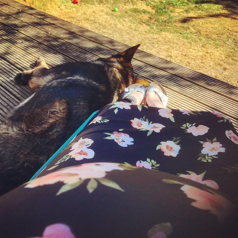 pregnant-sunshine-dexter-violet-skies