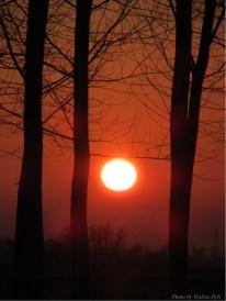 tramonto del 31 dicembre 2014 , © violeta dyli copyright