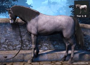 BDO Wild Horse Identification – Violet Astray