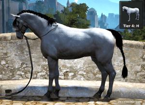 BDO Horse Catalog - See What Horses Really Look Like! – Violet Astray