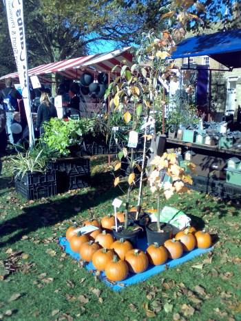 Pumpkins at the Apple Fair