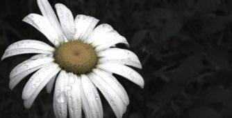 cropped-dsc_17452.jpg