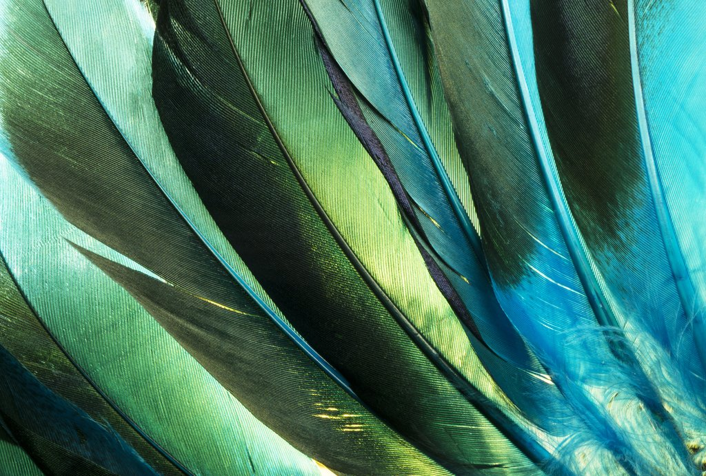 Green and Blue Iridescent Duck Feathers