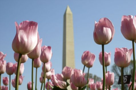 Washington Monument with flowers credit Joe Shymanski