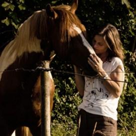 Hestepasning