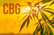 Какво е CBG масло и какви са неговите предимства?