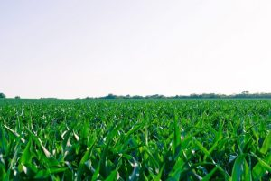 Enko Chem raises $45 million to develop crop protection solutions with AI