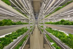 iFarm Raises $4 million to automate urban farming with AI and drones