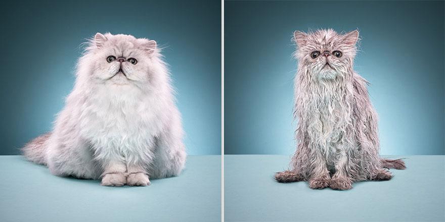 22隻令你無法不大叫「可愛」的濕水貓咪
