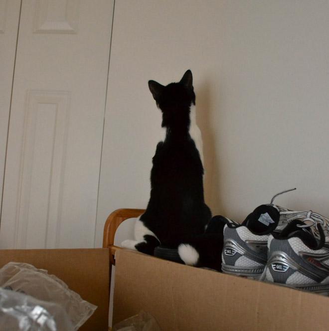 這17隻面壁的貓咪到底在想什麼?