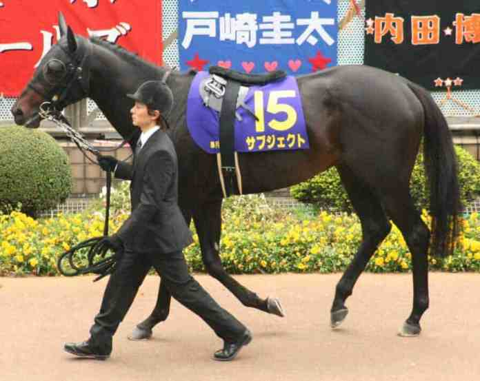 Top 10 most expensive horse breeds in the world 1