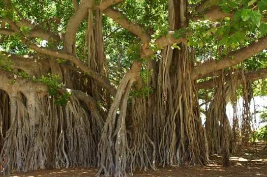 Most Beautiful Trees In The World 4