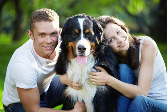 dog facts 9