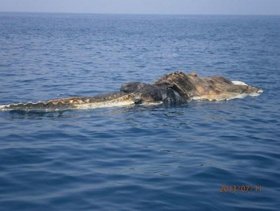 Gigantic-sea-Creature-2