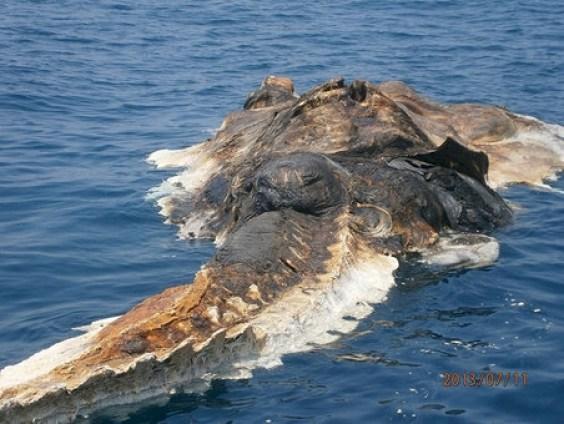 Gigantic-sea-Creature-3