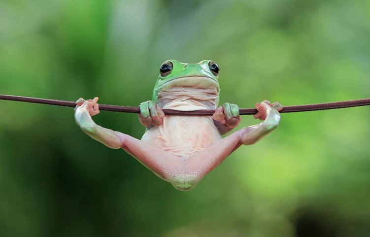 8-froggy-talent