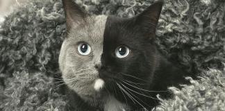 Virallk.com Pet lover