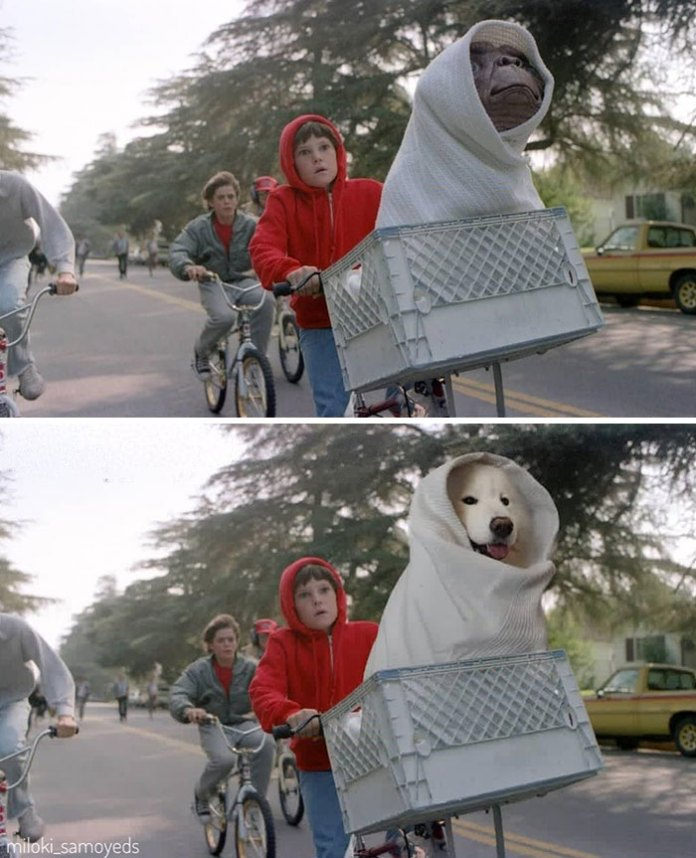 Dog owner Replaced Actors In Famous Movie Scenes With his Dogs and its look fantastic.